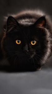 Preview wallpaper cat, black, maine coon, eyes, looks