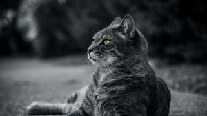 Preview wallpaper cat, bw, gray, lies
