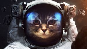 Preview wallpaper cat, cosmonaut, space suit, space