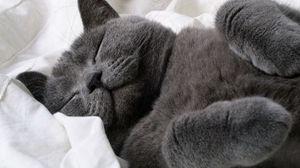 Preview wallpaper cat, down, paw