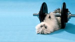 Preview wallpaper cat, dumbbells, funny, lie
