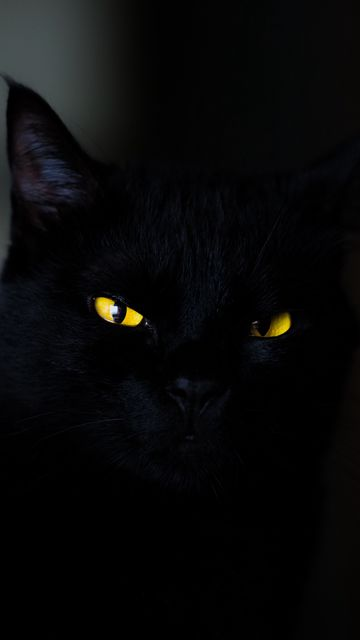360x640 Wallpaper cat, eyes, black