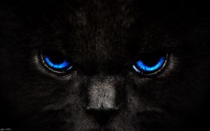 Preview wallpaper cat, eyes, blue, glance, dark