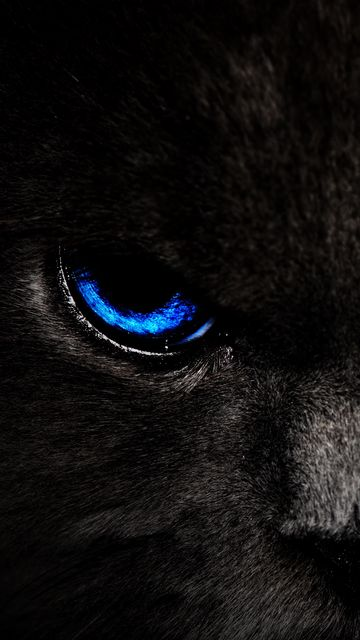 360x640 Wallpaper cat, eyes, blue, glance, dark