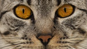 Preview wallpaper cat, face, eyes, nose