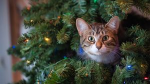 Preview wallpaper cat, glance, tree, pet, new year