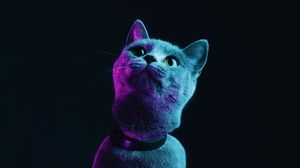 Preview wallpaper cat, gray, pet, neon
