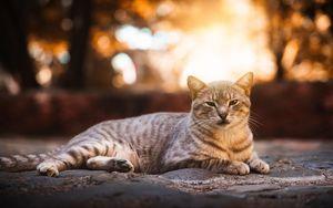 Preview wallpaper cat, gray, striped, cute, pet