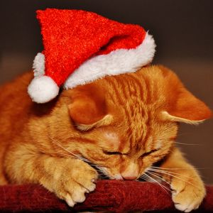 Preview wallpaper cat, hat, santa claus, new year