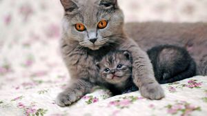 Preview wallpaper cat, kitten, caring, tenderness