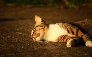Preview wallpaper cat, lying, striped, sunlight