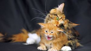 Preview wallpaper cat, maine coon, kitten, spotted