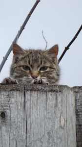 Preview wallpaper cat, muzzle, eyes, fence, peek