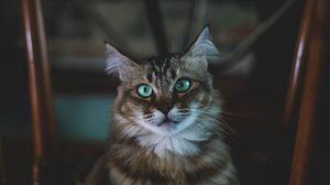 Unduh 700+ Wallpaper Android Kucing Hd HD Paling Baru