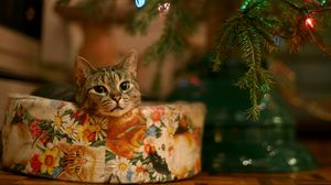 Preview wallpaper cat, new year, christmas tree, garland