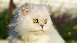 Preview wallpaper cat, pet, glance, fluffy, white, grass
