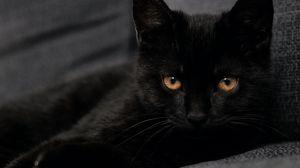 Preview wallpaper cat, pet, glance, black