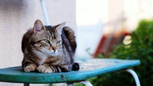 Preview wallpaper cat, sitting, striped