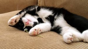 Preview wallpaper cat, sleep, dog, spotted, lying, feet