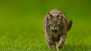 Preview wallpaper cat, spring, lawn, green, nature