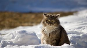 Preview wallpaper cat, winter, fluffy, snow