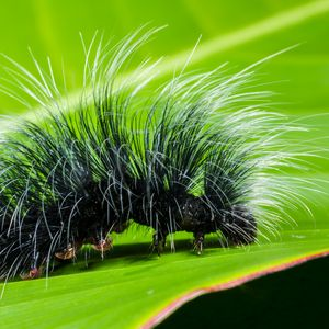 Preview wallpaper caterpillar, close-up, hair, leaf