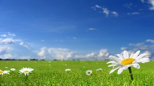 Preview wallpaper chamomile, field, sky, nature, sun, grass
