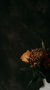 Preview wallpaper chrysanthemum, flower, brown, dark