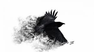 Preview wallpaper crow, wings, bird swing