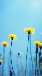 Preview wallpaper dandelions, flowers, blur, background
