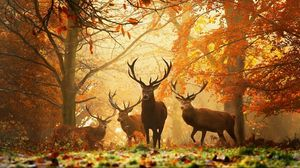 Preview wallpaper deer, grass, leaves, autumn, trees