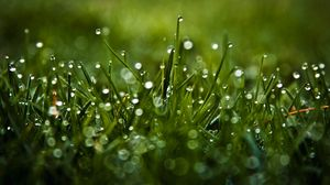 Preview wallpaper dew, glare, grass, drops, macro