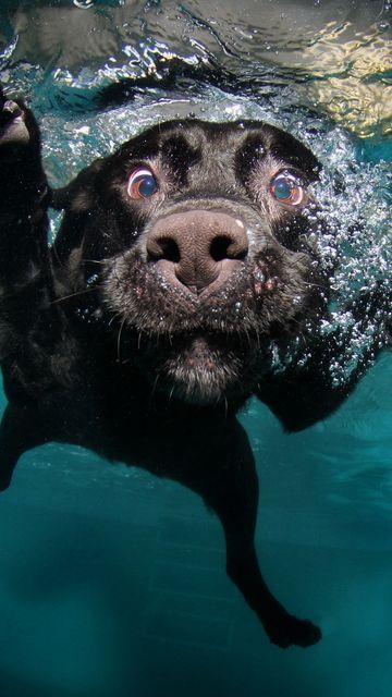 360x640 Wallpaper dog, black, underwater, swimming, water