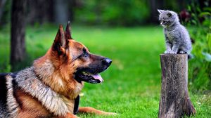 ... Preview wallpaper dog, cat, grass, german shepherd
