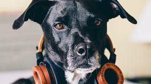 Preview wallpaper dog, headphones, music lover