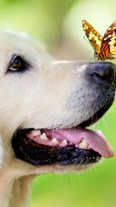 Preview wallpaper dog, muzzle, butterfly, tongue sticking out, spring, summer