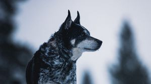Preview wallpaper dog, nature, snow, pet, glance