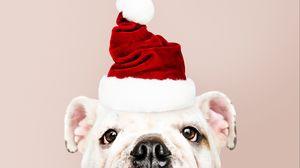 Preview wallpaper dog, santa claus, new year, christmas