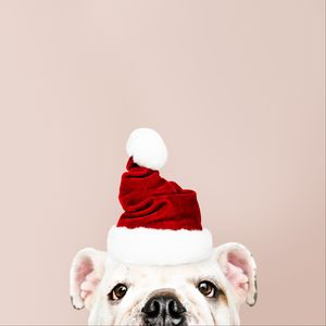 Preview wallpaper dog, santa claus, new year, christmas