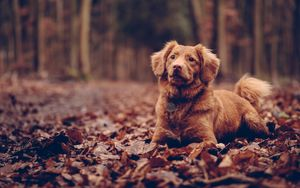 Preview wallpaper dog, sitting, foliage