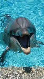 Preview wallpaper dolphin, smiling, water, pool