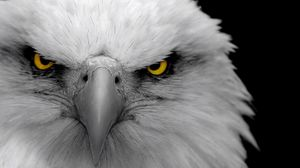 Preview wallpaper eagle, bird, predator, beak