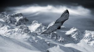 Preview wallpaper eagle, mountain, sky, snow, hills, birds, predators