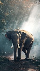 elephant iphone 8 7 6s 6 for parallax wallpapers hd, desktoppreview wallpaper elephant, forest, trees, sunlight, shadow