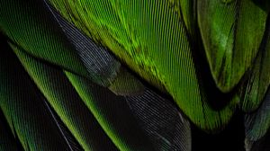Preview wallpaper feathers, texture, color, green