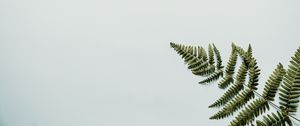 Preview wallpaper fern, branch, leaves, white