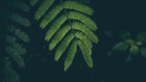 Preview wallpaper fern, leaf, plant, green