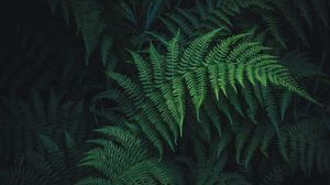 Preview wallpaper fern, leaves, green, plant, carved