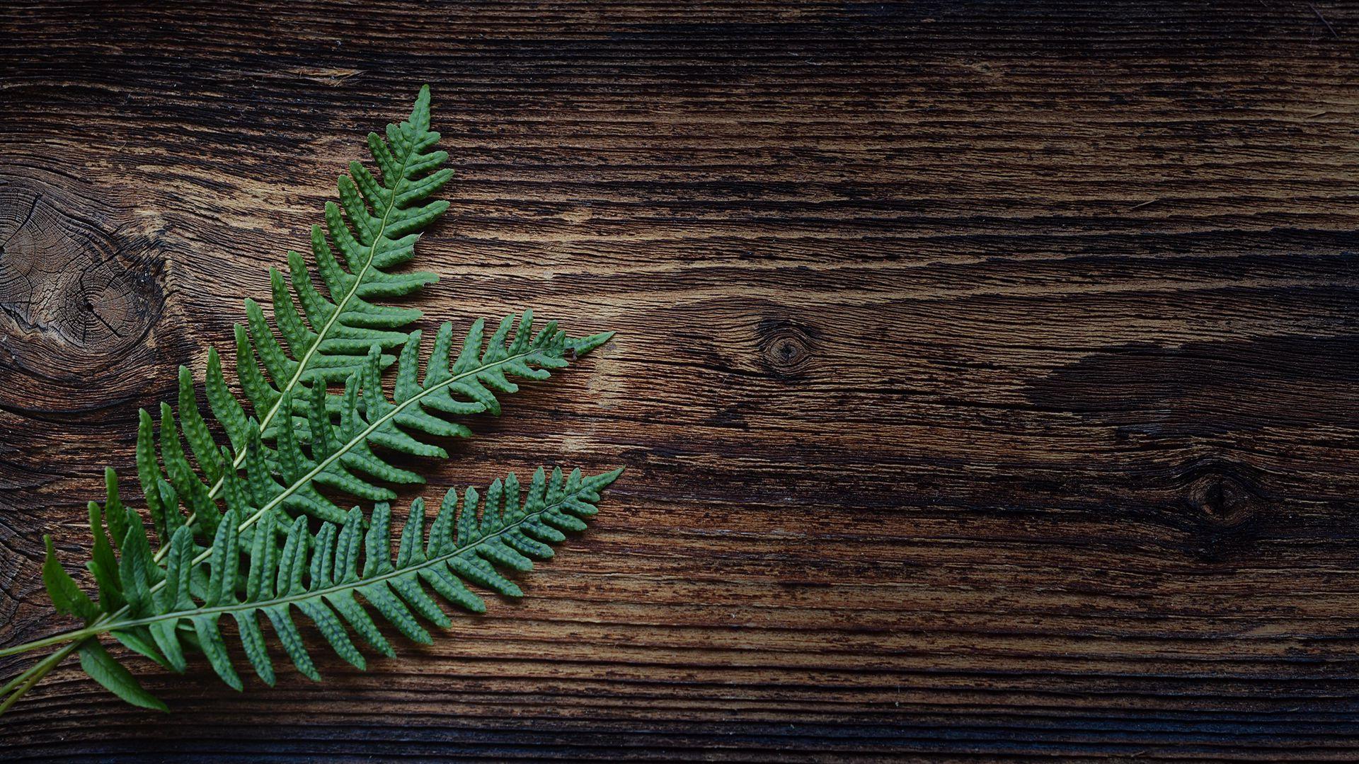 1920x1080 Wallpaper fern, plant, leaves