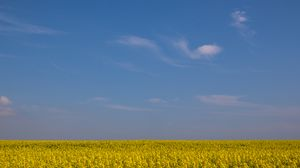 Preview wallpaper field, horizon, flowers, sky, yellow, blue
